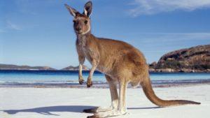 Австралия — страна мечты?
